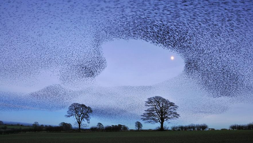 The murmurations of a collaborative, sustainable economy